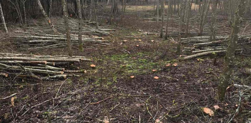 Thinning in alders