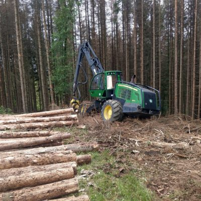 Damaged spruces cutting in Germany