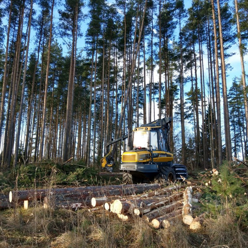 Clear-cutting with harvester