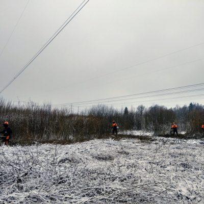 Shrub cutting Under the power lines