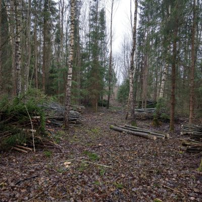 Thinning with loggers